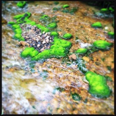 苔の生える岩